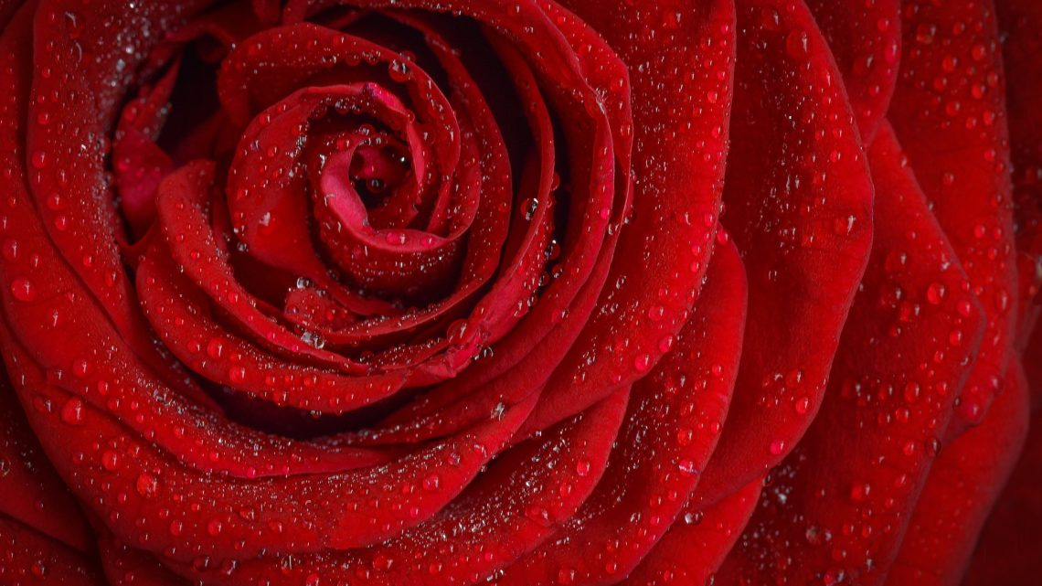 San Valentín en pareja o solo