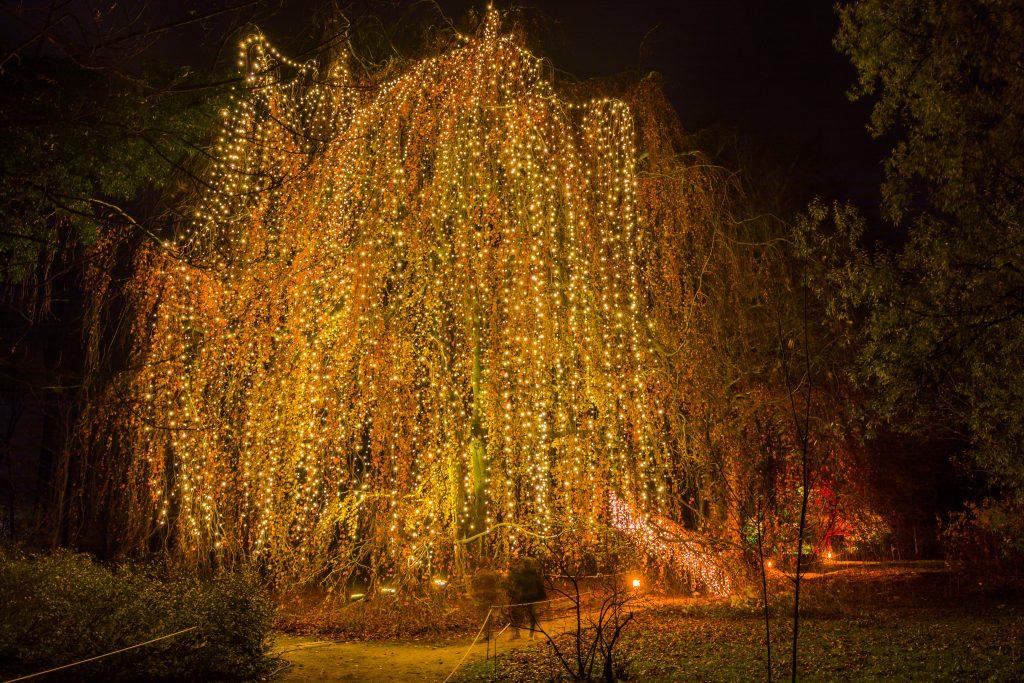 Jardín Navideño. Alemania