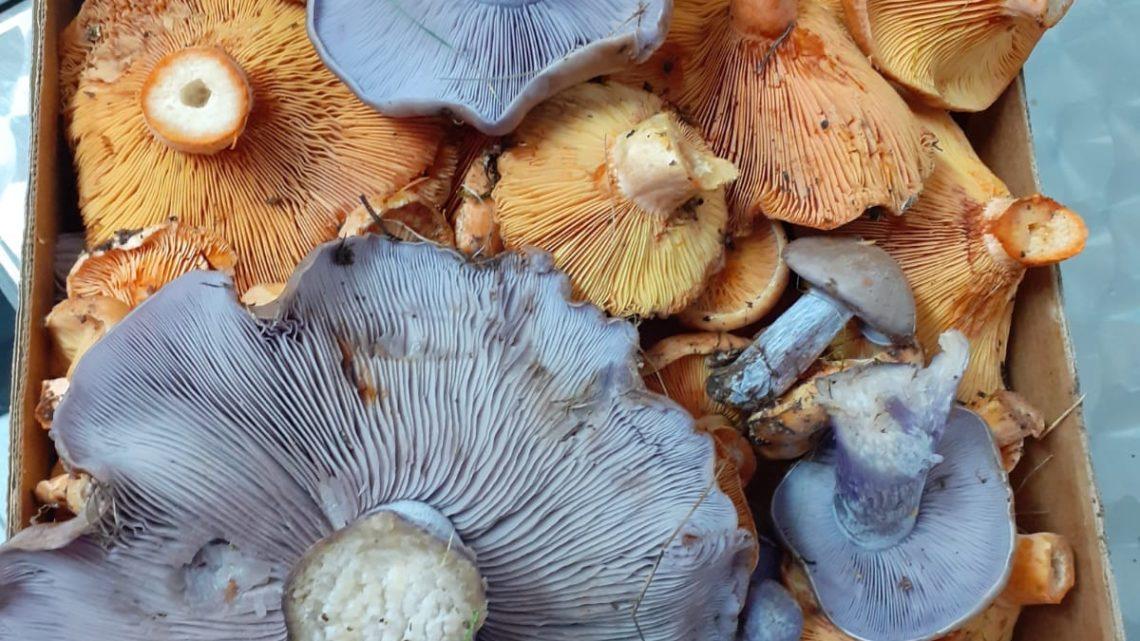 ¡Empieza la temporada de hongos y setas!
